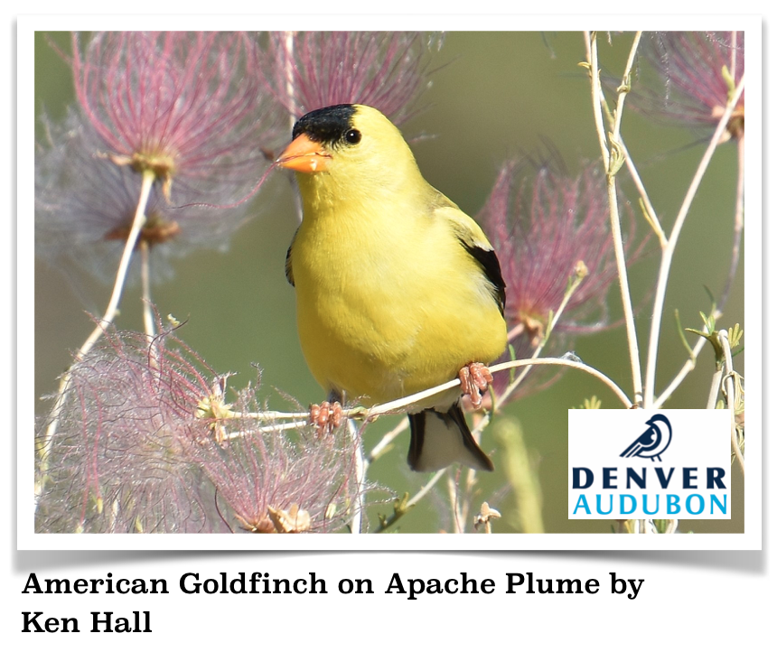 Native Plants for Birds Virtual Guided Tour