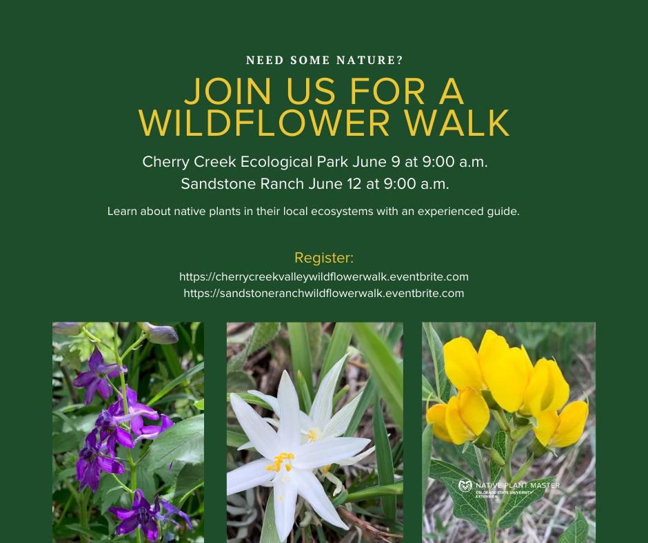 Wildflower Walk at Sandstone Ranch